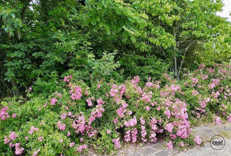 arboretum-chatenay-malabry16