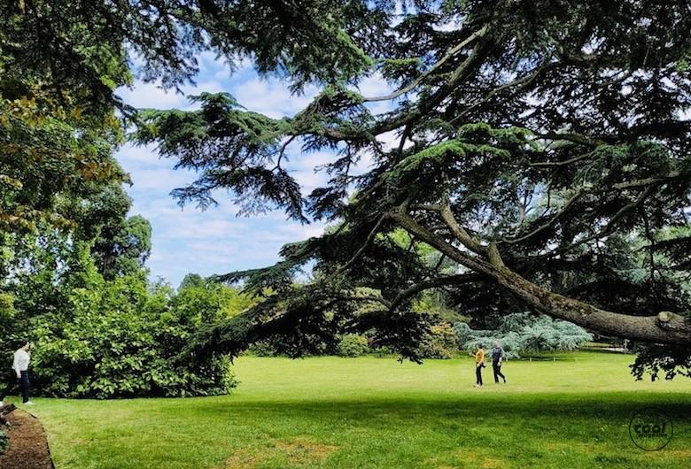 arboretum-chatenay-malabry6