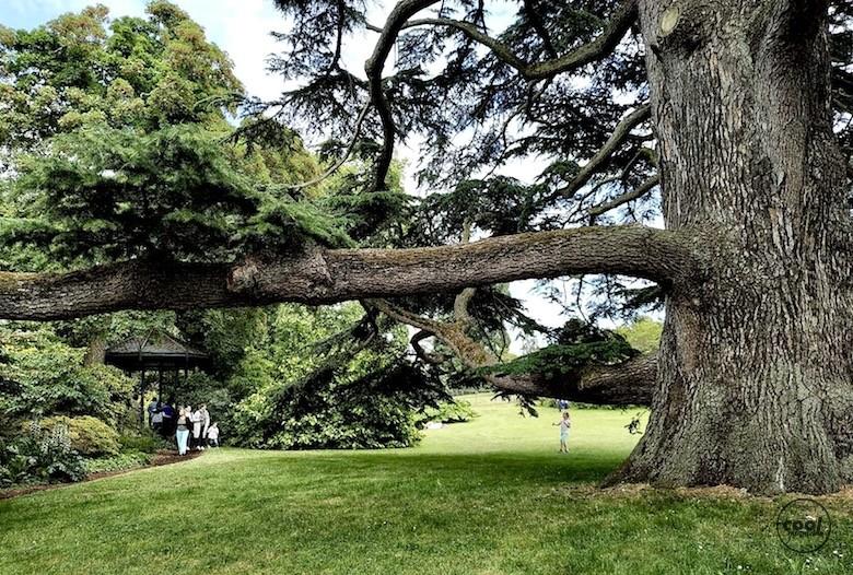 arboretum-chatenay-malabry7