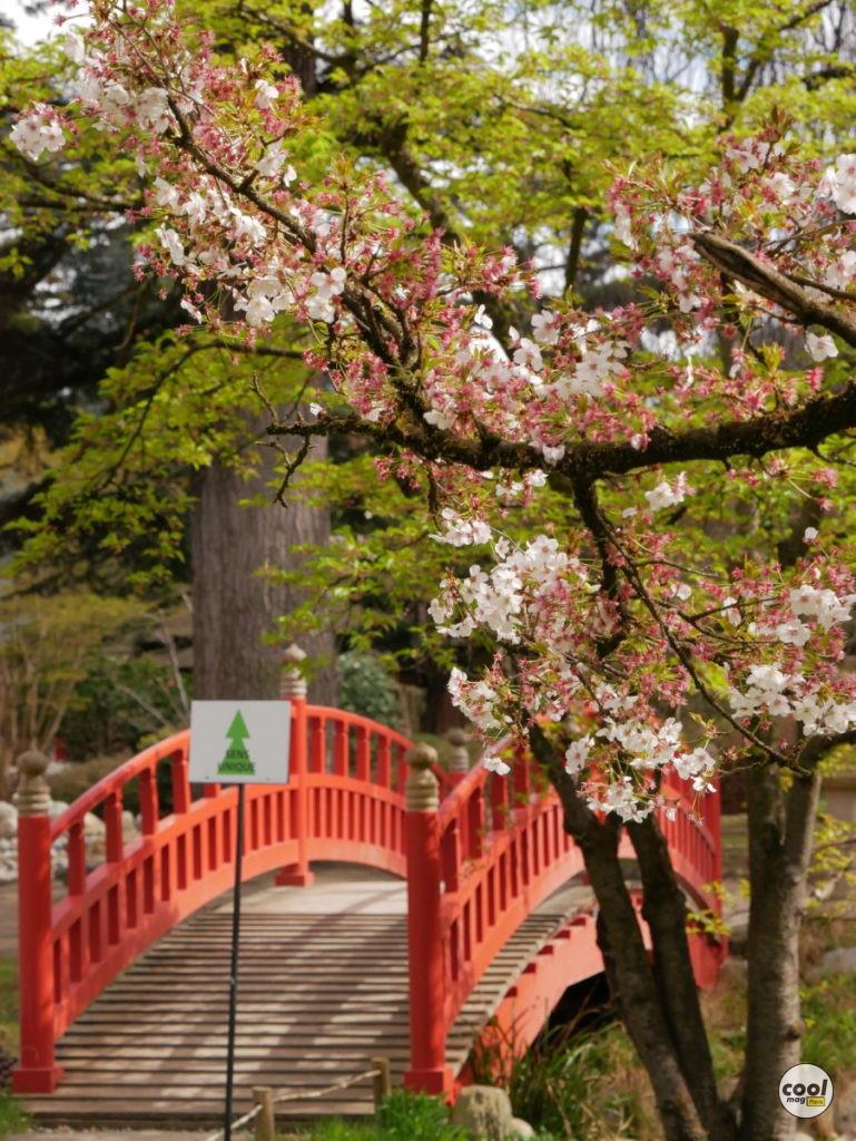 Cerisiers en fleurs Paris Île-de-France 1