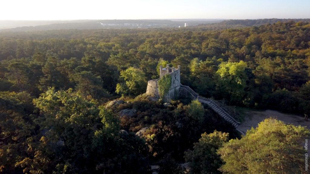 visites guidées forêt Fontainebleau